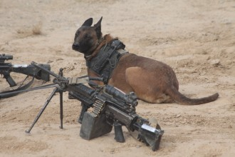 Military Working Dog in Cell
