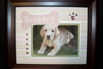 Personalized Dog Picture Frame in Laboratory