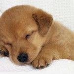 Puppy Dog Animal Photo , 7 Stunning Pictures Of Dogs And Puppys In Dog Category