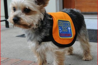 Service Dog Vest in pisces