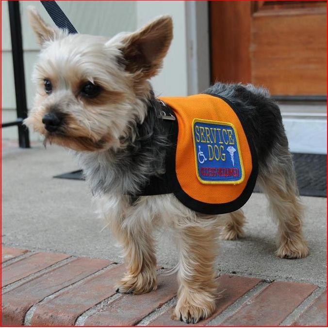 Dog , 6 Superb Pictures Of Service Dogs : Service Dog Vest