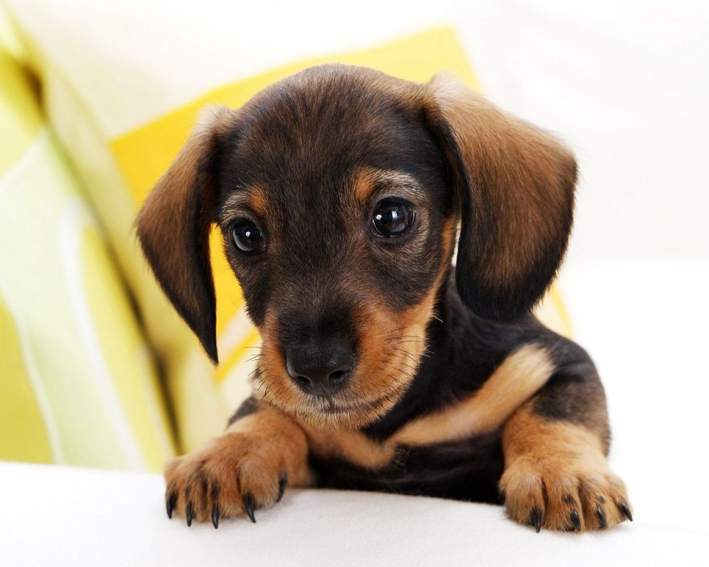 Small Dog Breed