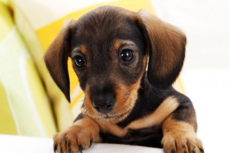 Small Dog Breed in Cell