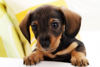 Small dog breeds in Dog