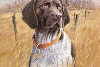 Some Art Pictures Of Dog , 7 Amazing Art Pictures Of Dogs In Dog Category