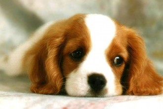 The Dog In World , 8 Popular Names And Pictures Of Dogs In Dog Category