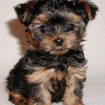 Toronto pet stores , 7 Popular Dog Pictures For Sale In Dog Category