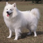 Truly American Dog Breeds , 7 Amazing Dog Breeds With Pictures In Dog Category