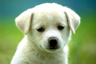About Dogs , 8 Popular Names And Pictures Of Dogs In Dog Category