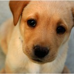 animal shelter , 5 Cute Dog Pictures Contest In Dog Category