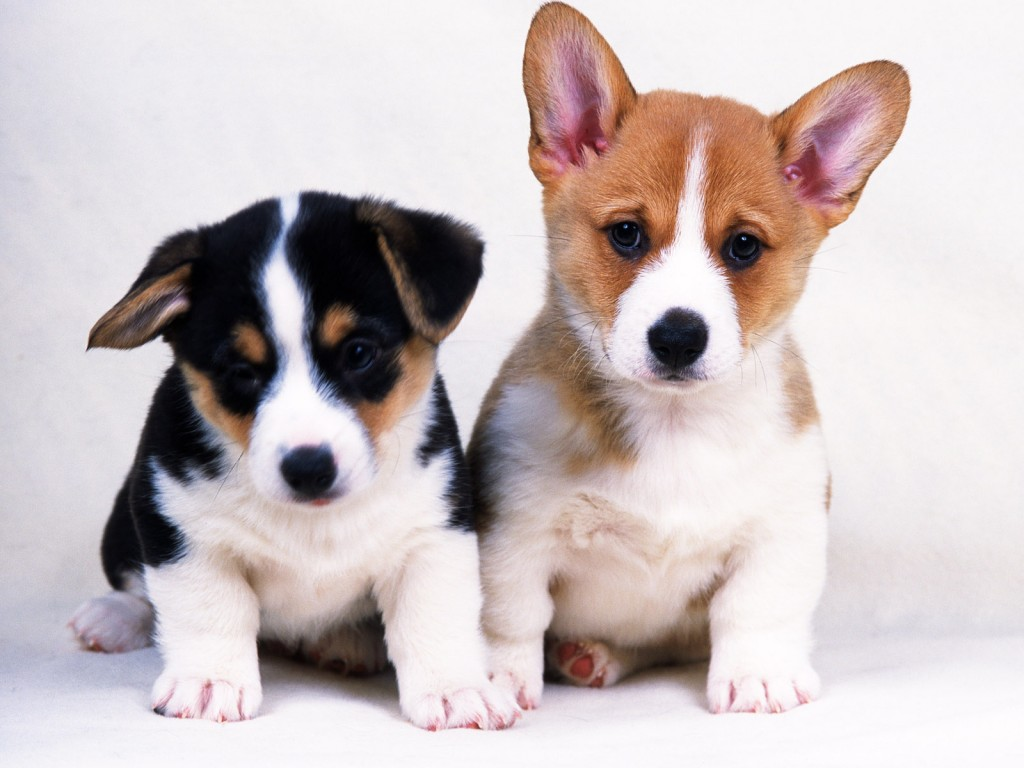 animals dogs