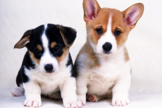 animals dogs in Genetics