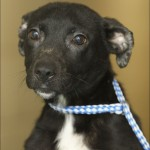 border collie , 7 Superb Pictures Of Dogs For Adoption In Dog Category