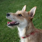 breed dog , 7 Awesome Dogs Pictures And Breeds In Dog Category