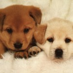 breeding dogs , 6 Stunning Pictures Of Dogs In Dog Category