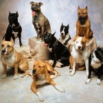 breeds Dog Wallpapers , 7 Amazing Dog Breeds With Pictures In Dog Category