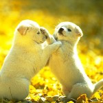 cute dog images , 7 Stunning Pictures Of Dogs And Puppys In Dog Category