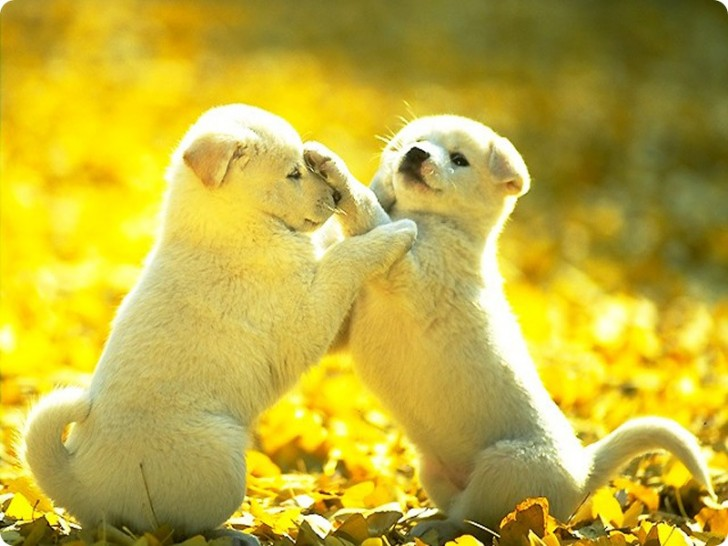 Dog , 7 Stunning Pictures Of Dogs And Puppys : Cute Dog Images