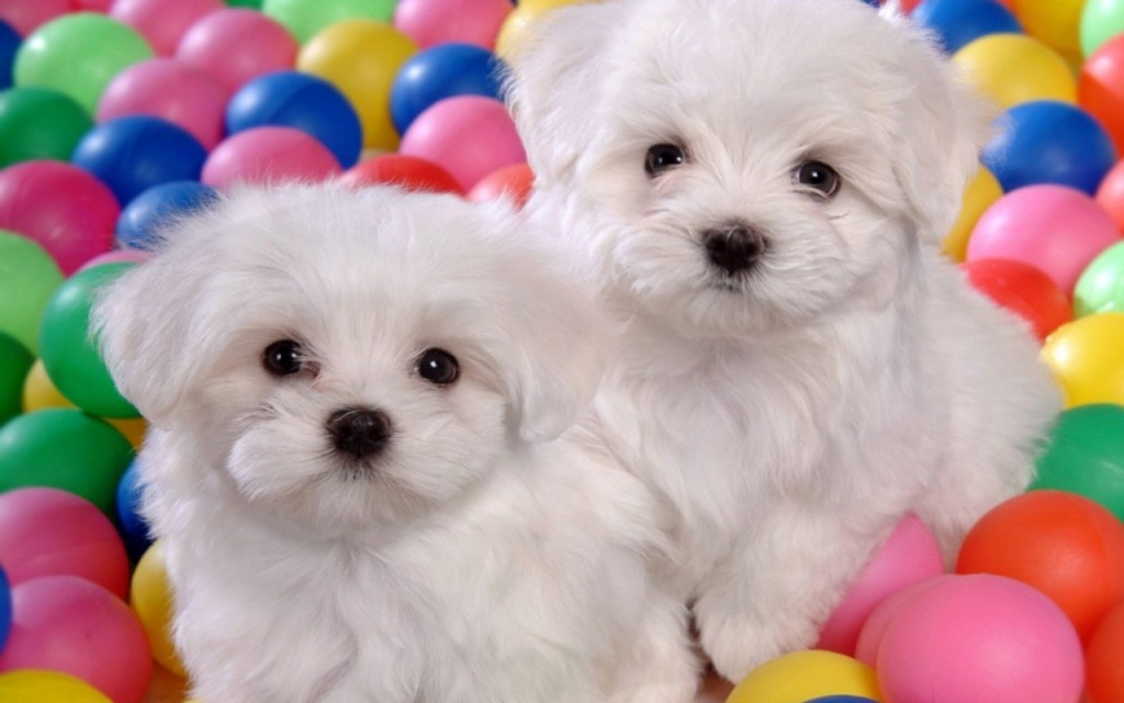 cute images cutest puppy contest