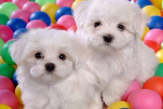 cute images cutest puppy contest in Mammalia