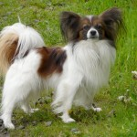 cutest dog breeds , 7 Stunning Pictures Of Dogs Breeds In Dog Category