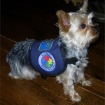 dog behavior , 6 Superb Pictures Of Service Dogs In Dog Category