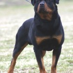 dog breed originating , 7 Stunning Pictures Of Dogs Breeds In Dog Category