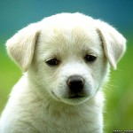 dog breeds with pictures , 6 Stunning Pictures Of Dogs In Dog Category