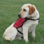 dog harness , 6 Superb Pictures Of Service Dogs In Dog Category