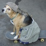 dogs are cool , 7 Amazing Art Pictures Of Dogs In Dog Category