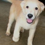 dogs available , 7 Superb Dog Adoption Pictures In Dog Category