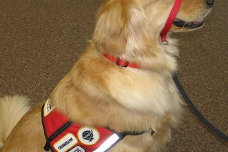Emotional Support Animal , 6 Superb Pictures Of Service Dogs In Dog Category