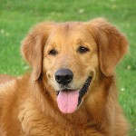facts about dogs , 7 Top Picture On Dog In Dog Category