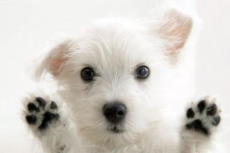 Free Stock Images , 8 Popular Names And Pictures Of Dogs In Dog Category