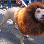 funny dog haircuts , 6 Amazing Pictures Of Dog Haircuts In Dog Category