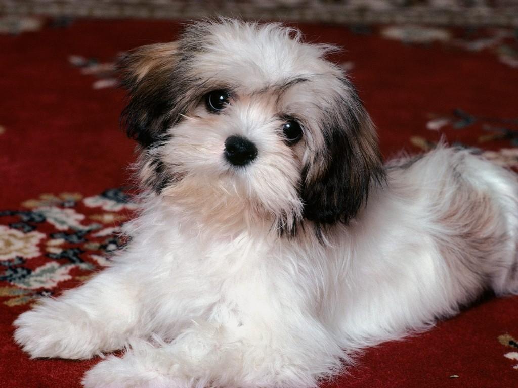 keywords puppy dog