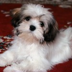 keywords puppy dog , 7 Gorgeous Dog Pictures Free In Dog Category