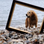labrador , 5 Fabulous Cute Dog Picture Frames In Dog Category