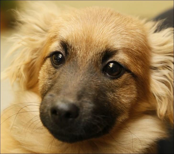 Dog , 6 Excellent Dogs For Adoption Pictures :  Labrador Retriever