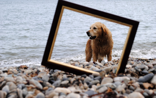 Dog , 5 Fabulous Cute Dog Picture Frames : Labrador