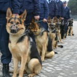 military dogs by stiviljan , 6 Unique Military Dog Pictures In Dog Category