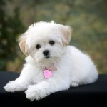 picture by Kristi Chesley , 7 Amazing Dog Breeds With Pictures In Dog Category