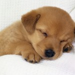 puppies for adoption , 7 Top Picture On Dog In Dog Category