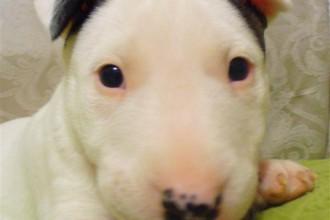 puppy breeds  in pisces