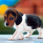 puppy dog , 7 Stunning Pictures Of Dogs And Puppys In Dog Category