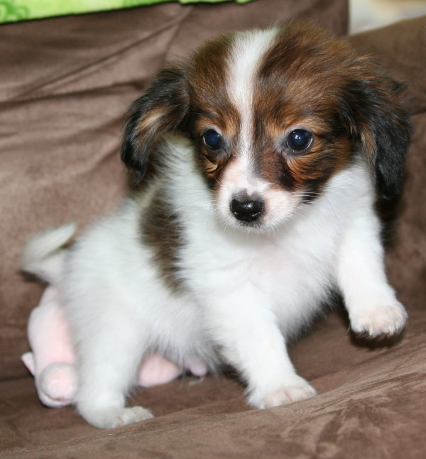 small dog breeds list : Biological Science Picture ...