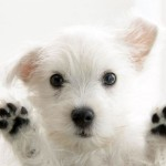 toy dog breeds , 6 Stunning Pictures Of Dogs In Dog Category
