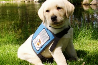 Very Special Training , 6 Superb Pictures Of Service Dogs In Dog Category
