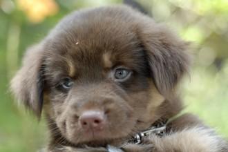 yorkshire terrier in Invertebrates
